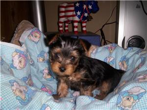 My dog as a pup
